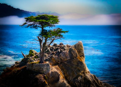 The Lone Cypress  of Pebble Beach #6
