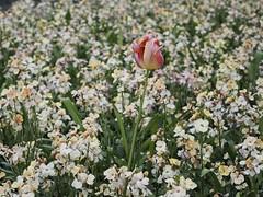 Flor entre las flores