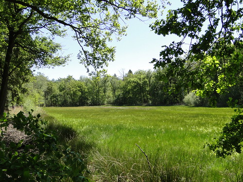 Meadow in Pan nature reserve
