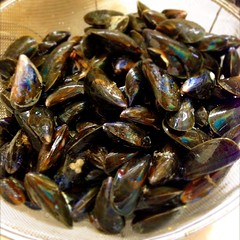 Raw Mussles in the Shell