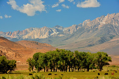 The Sierra Nevada from Owens Valley