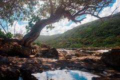 Lagon de la Porte d'Enfer, Anse-Bertrand, Grande-Terre, Guadeloupe