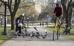 Allan Gardens, Toronto 0274