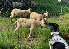 Spurs Meets the Goats