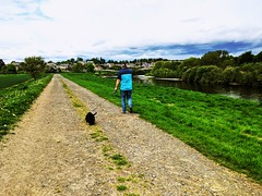River Tweed walk at Coldstream, May 2020