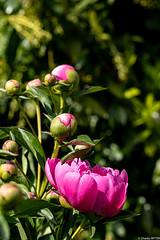 confinement fleurs Paul