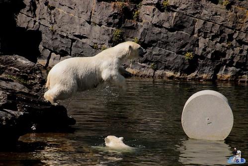 Eisbären Hertha und Tonja im Tierpark Berlin 09.05.2020 150