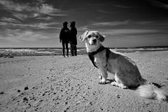 Dogwalk on the beach