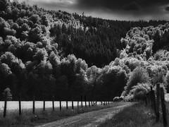 Eifel - Frühlingslandschaft - Spring landscape