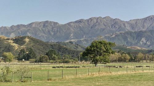 Kaikoura - Christchurch_1860978_dxo