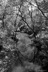 morning at the creek (mono)