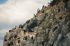 Beagle Channel. Ushuaia, Patagonia - Argentina