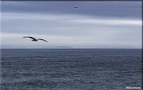 IMG_1711_Fly Away