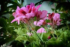 014237 - Flores