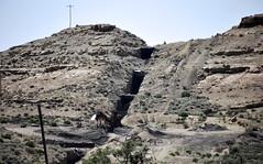 Independent Dike (gilsonite dike in the Uinta Formation, Middle Eocene; Bonanza, Utah, USA) 7