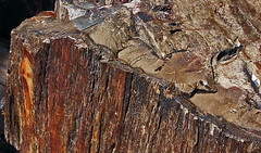 closeup of petrified wood