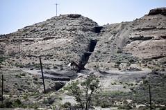 Independent Dike (gilsonite dike in the Uinta Formation, Middle Eocene; Bonanza, Utah, USA) 5