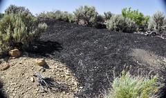 Gilsonite piled up next to Cowboy Dike (north of Bonanza, Utah, USA) 1