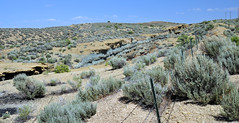 Cowboy Dike (gilsonite dike in the Uinta Formation, Middle Eocene; north of Bonanza, Utah, USA) 6