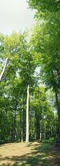 Forest | May 10, 2020 | Ruhwinkel - Kreis Plön - Schleswig-Holstein - Germany