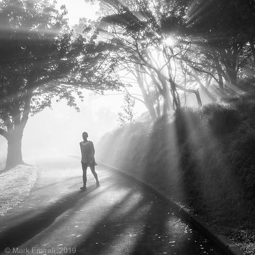 Mt Albert /Owairaka Park Stroll