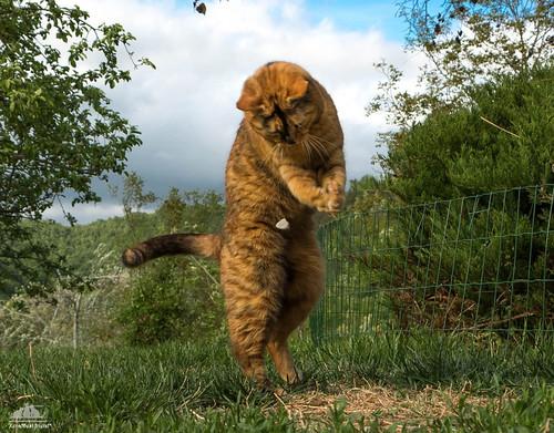 Basketball Kitty :-))