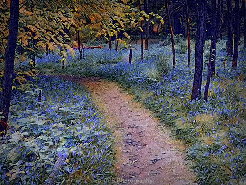 On Past The Bluebells