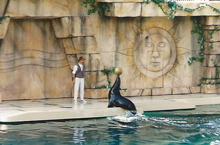 Photo 5 of 7 in the Sea World gallery