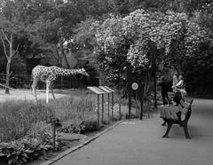 After the lookdown, nosey giraffe