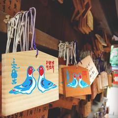 Japanese Ema Prayer Votives with Pigeons | Kyoto, Japan