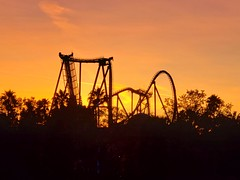 SheiKra At Sunset