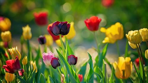 Colorful Spring Impression