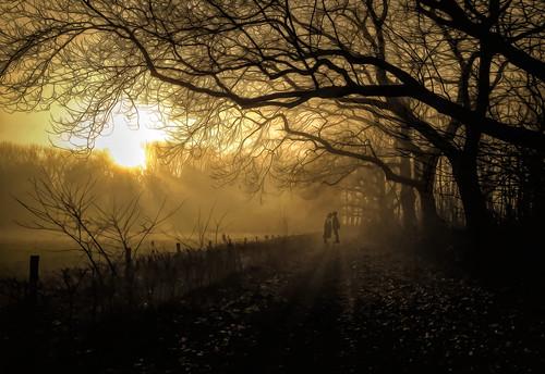 A fog dream