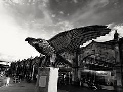Sheffield station bird