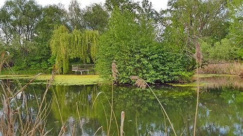 Am Teich / By the pond