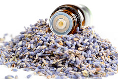 Bottle of essential oil and lavender flowers, close up