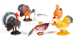 Poultry farm with chickens, turkeys, ducks and geese. Children's toys concept