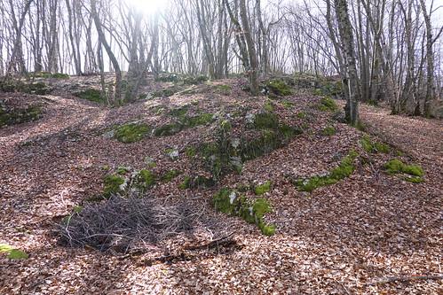Forest @ Choisy