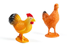 Chickens plastic toys for kids on white background