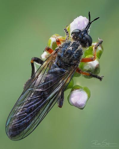 • Little fly ? •