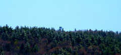 View of Fire Tower from Pawtuckaway North
