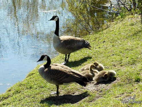 Guarding Their Young