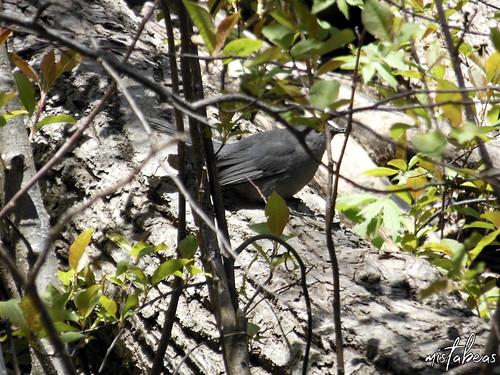 Bird Among Trees