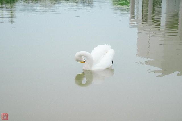 Photo:P1030086-9 By zunsanzunsan