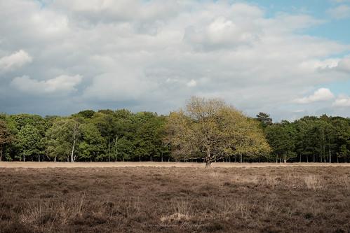 solitair in laagjes landschap