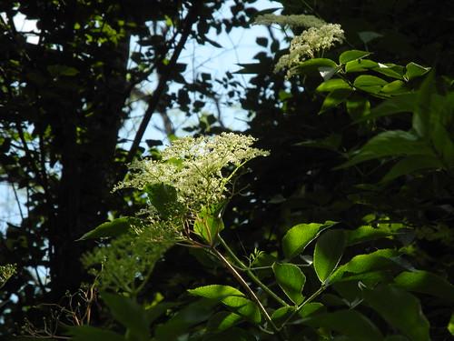 Balade dans la forêt / Spaziergang im Wald / Прогулка по лесу