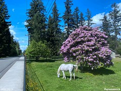 Farm, Horses, Flowers