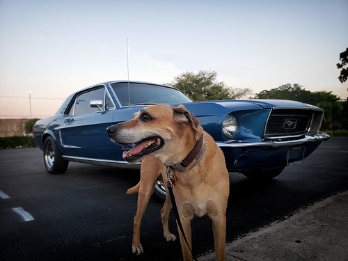 69 Ford Mustang With and Without Badass Dog