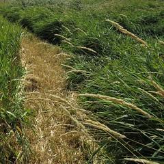 Grassland №5
