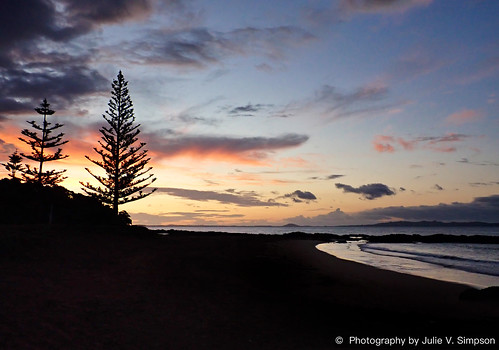 Cable Bay tree silhouettes orange sunset